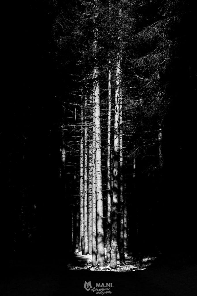 Una lama di luce illumina un gruppo di alberi