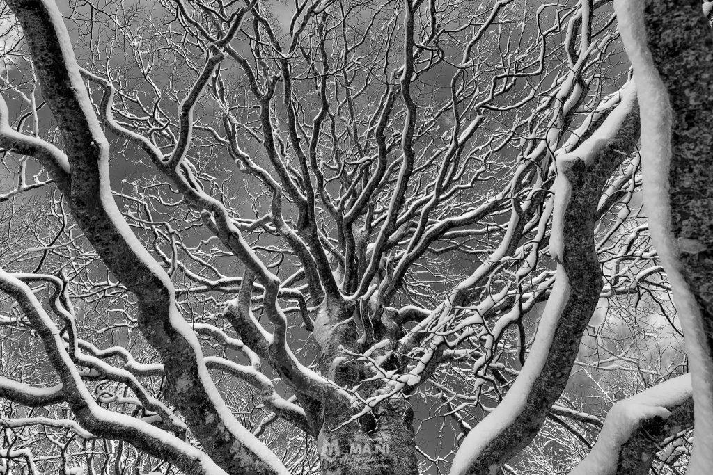 Ordine e disordine nel groviglio di rami ricoperti di neve